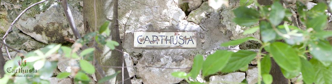 カルトゥージア